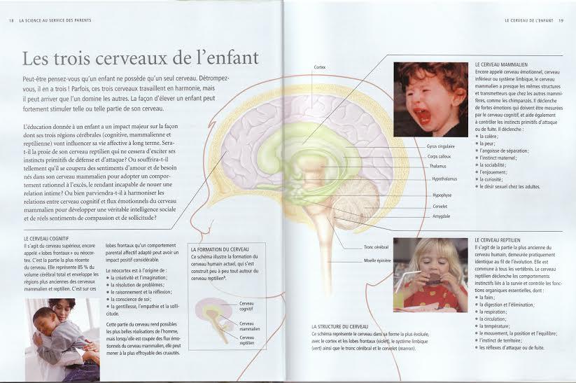 Annexe cerveaux